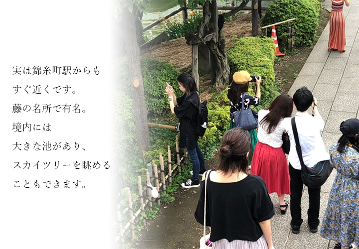 実は錦糸町駅からもすぐ近くです。藤の名所で有名。境内には大きな池があり、スカイツリーを眺めることもできます。